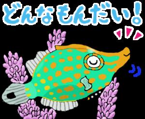 テングカワハギ【またねこのお魚紹介】