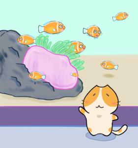 ハナビラクマノミ【またねこのお魚紹介】