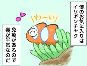 カクレクマノミ漫画
